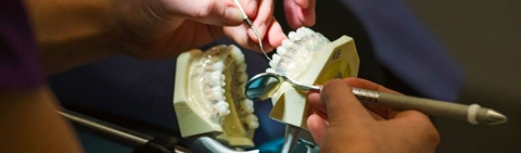 Students work on a model mouth and teeth.